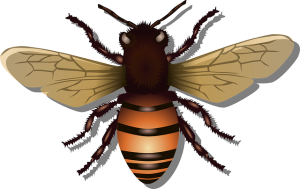Hausmittel gegen Fliegen