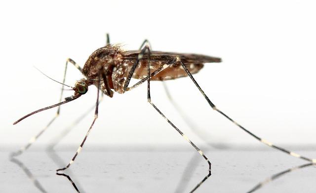hausmittel-mückenstich
