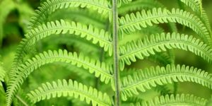 grüne Pflanzen dank Pflanzenlicht